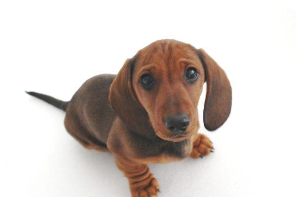 Wallops Wood loves puppies this is Bentley