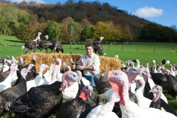 Ashford Farm turkeys at Wallops Wood