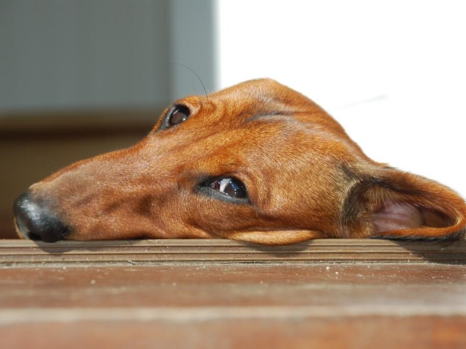 Bentley the sausage dog at Wallops Wood Cottages September