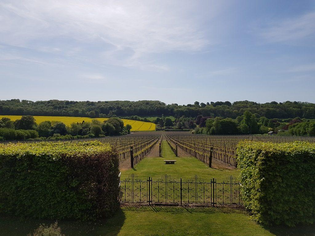 Hambledon Vineyards