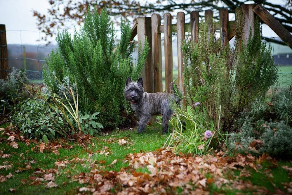 Pepper the dog at Wallops Wood