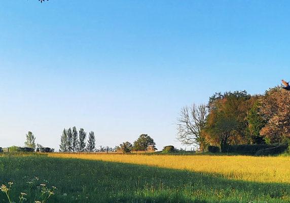 Chapel Hill meadow